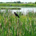 Park-Birds June 23 (17)